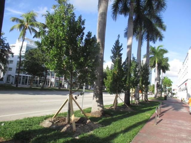 5 street trees