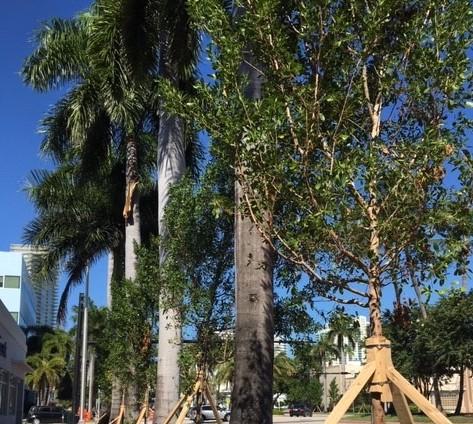 New Trees GOB2